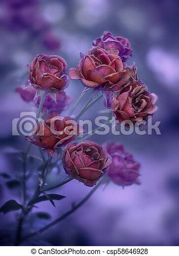 rosa selvagem antes e depois