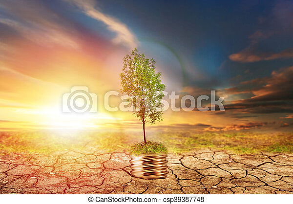 secos, solo, lâmpada, árvore, verde - csp39387748