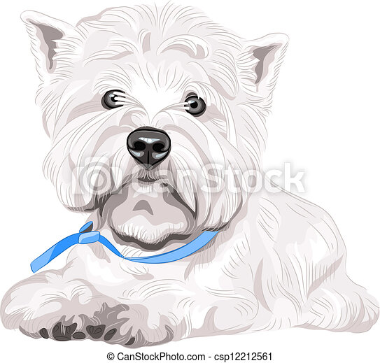 sentando, oeste, raça, cão, vetorial, sério, branca, altiplano, terrier - csp12212561