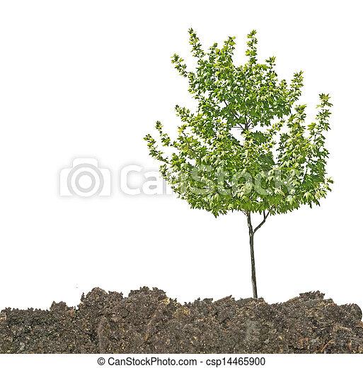 solo, árvore - csp14465900