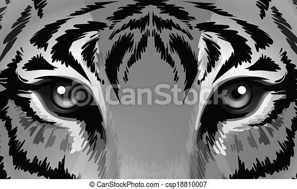 tiger, afiado, olhos - csp18810007