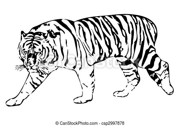 tiger - csp2997878