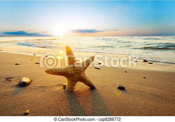 verão, praia, ensolarado, starfish - csp8286772