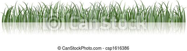 vetorial, capim, ilustração - csp1616386
