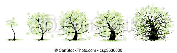 vida, antigas, tree:, idade, juventude, maioridade, infancia, fases, adolescência - csp3636080